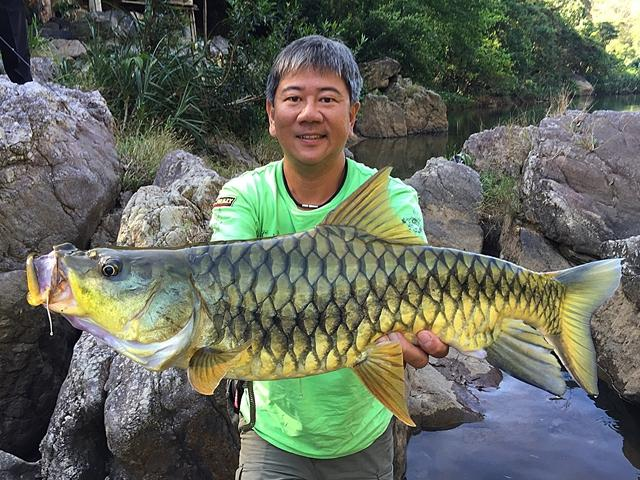 Black Mahseer from Sri Lanka