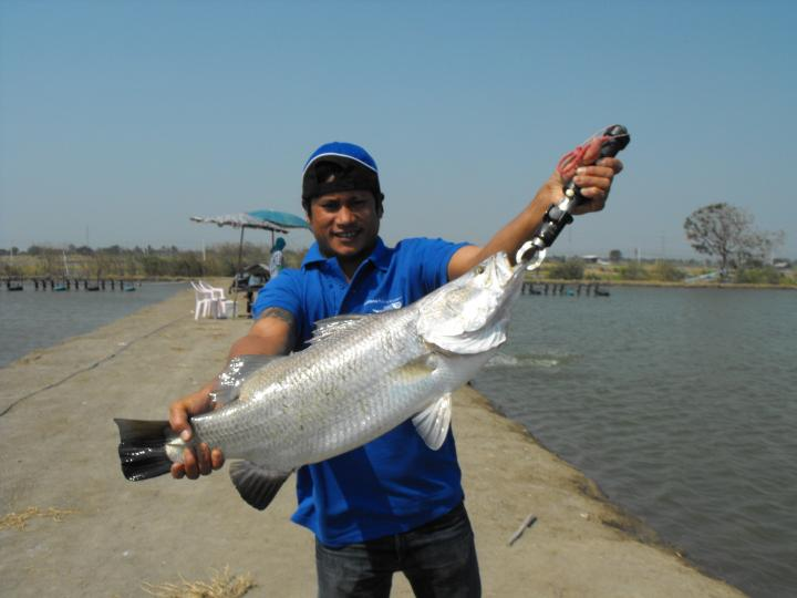 Boon Mar Ponds - Thailand Fishing Guide