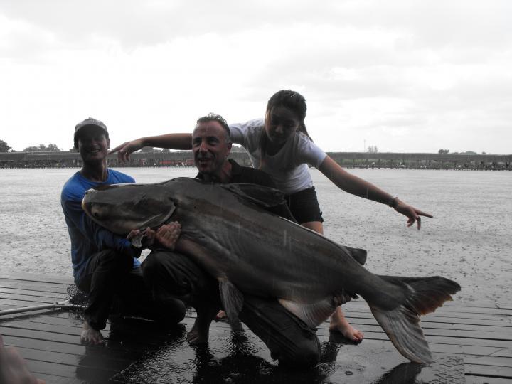Mekong Catfish, The Underwater Steamtrain
