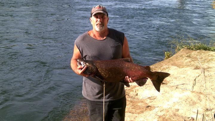 20 pound salmon