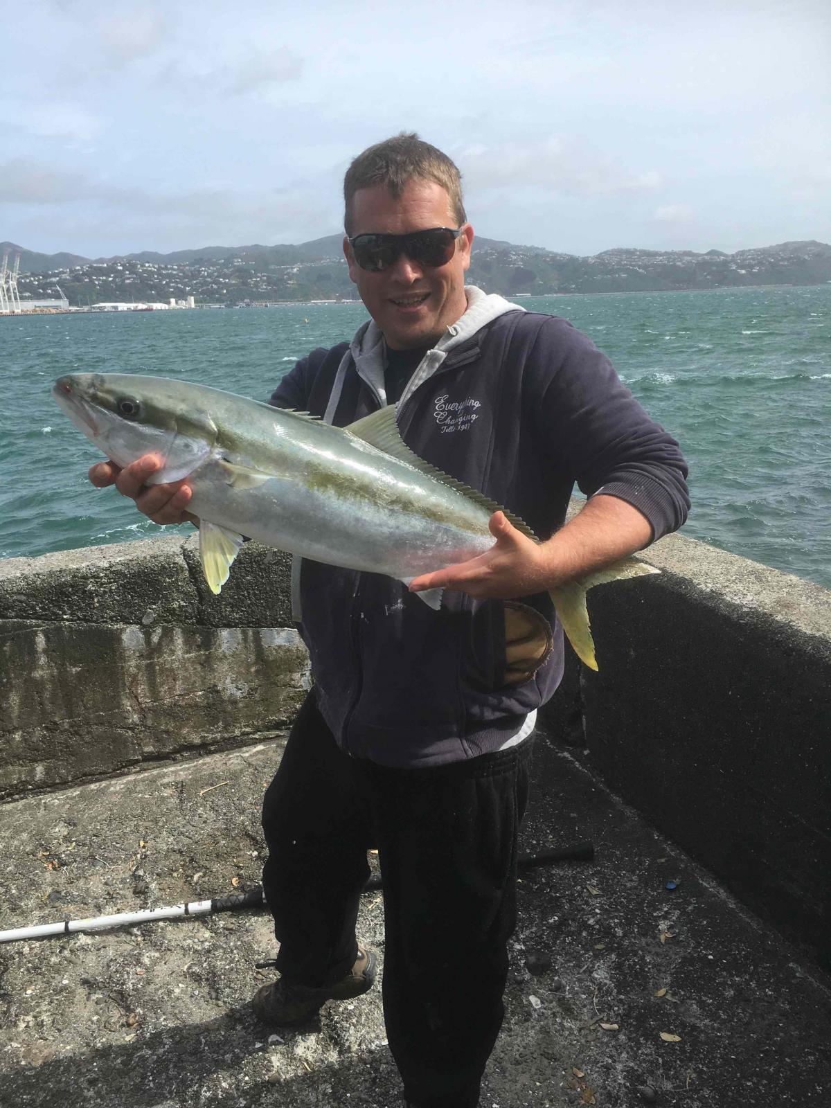 Kingfish first of 2017 at Oriental Bay Wellington New Zealand