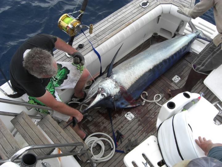 national Record Black marlin in Fiji