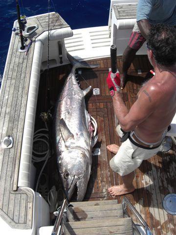 Dogtooth Tuna in Fiji
