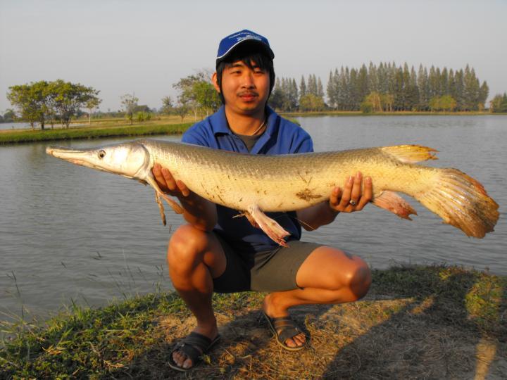 Alligator Gar - Thailand Fishing Guide