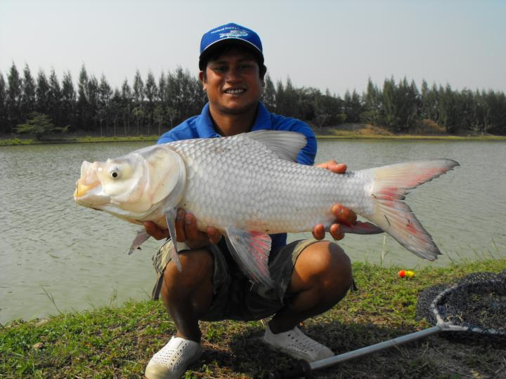 Siamese Carp - Thailand Fishing Guide