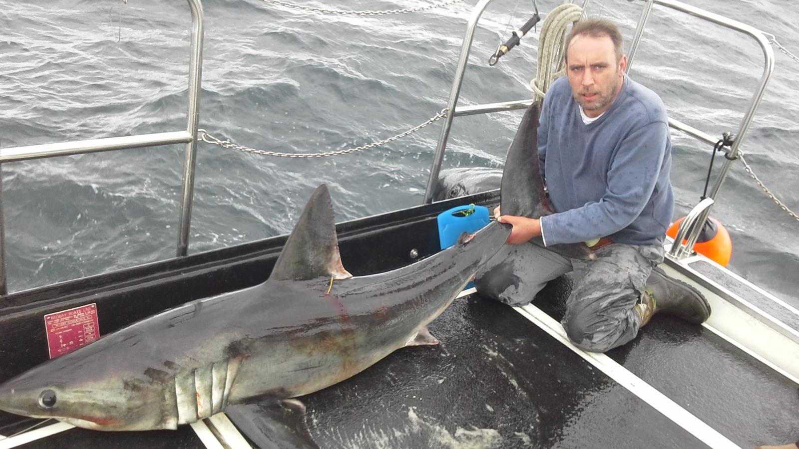 Simons Shark 2014