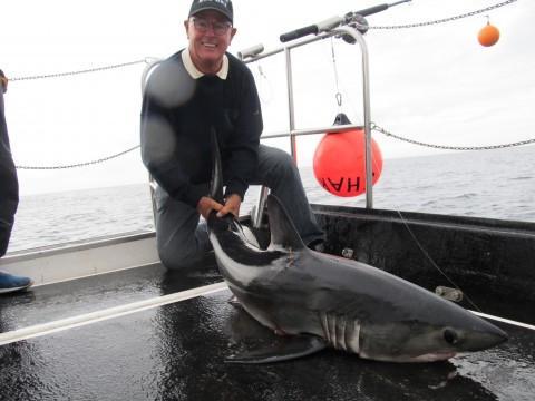 Hans Shark 2014