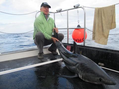 Shark 2014.