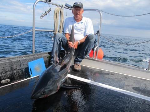 Shark 2014
