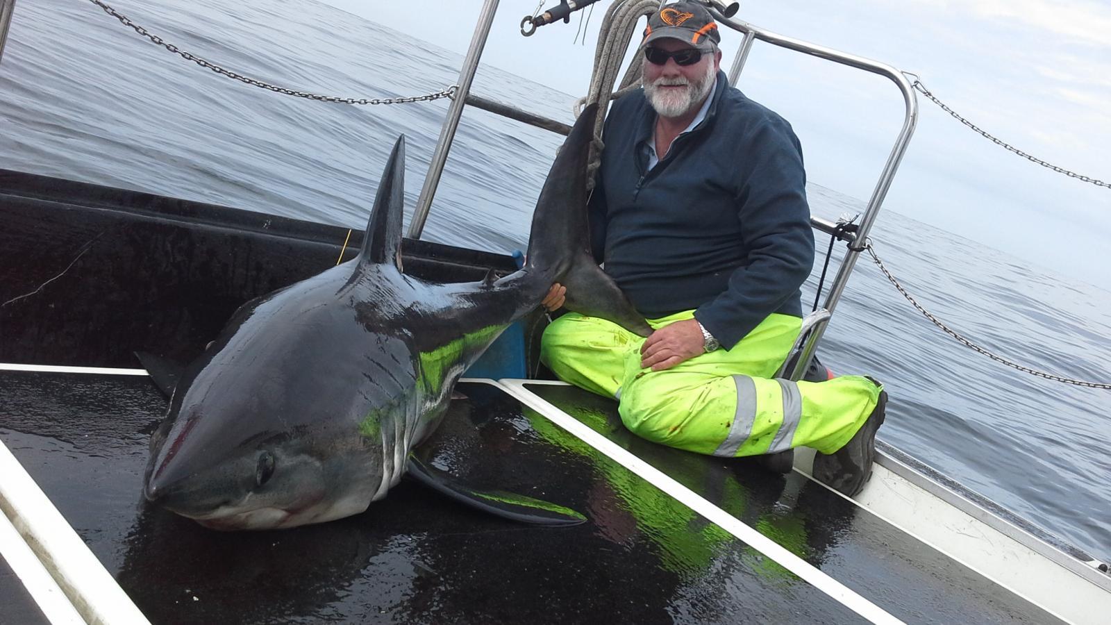 Brians Shark 2014