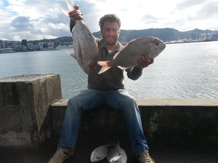 Snapper from the harbour