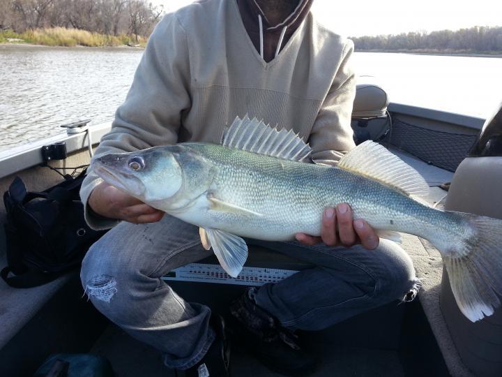 big lake winnipeg walleye