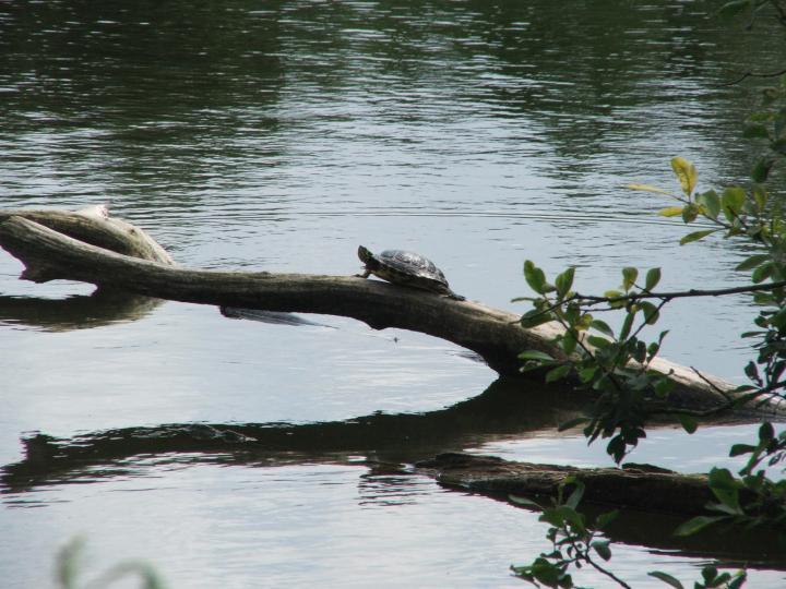 Mr Turtle 2011 linkenkæret