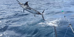 Fishing is an important activity in Costa Rica - Costa Rica Fad
