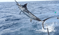 Fishing is unstoppable fun in Costa Rica