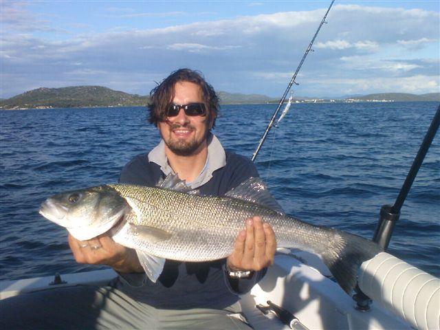 labrax - European SeaBass, 4.5kg