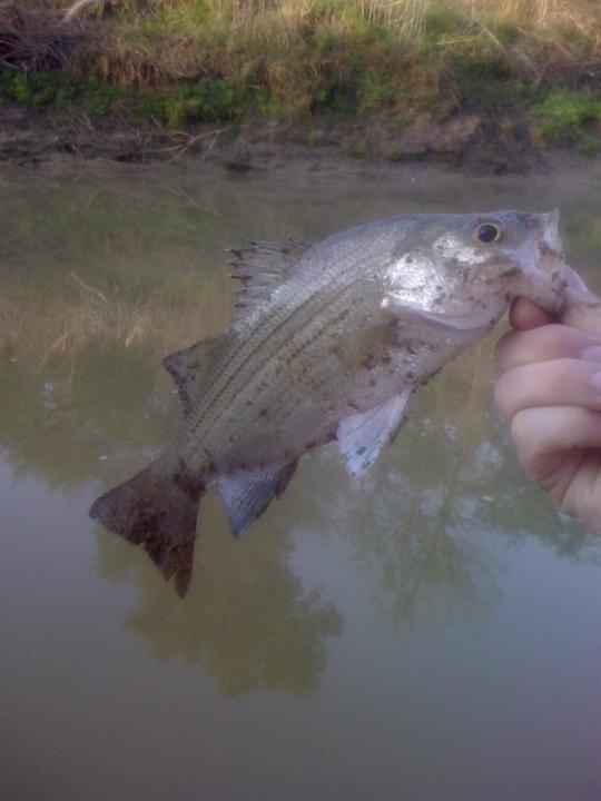 Kick My White Bass